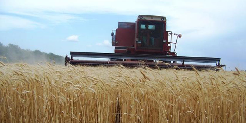 JFF Farm Manager Norm Oeding combining wheat, May 2012.