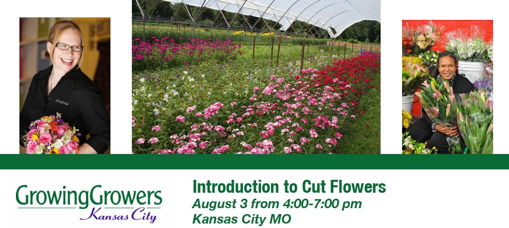 Introduction to Cut Flowers