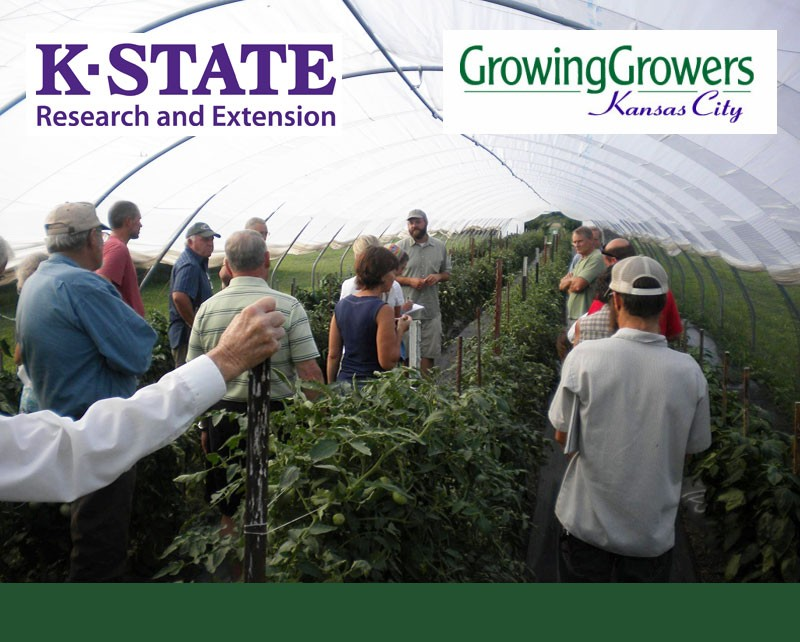 K-State Vegetable Research Field Day