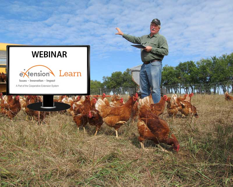Common money wasters with poultry: Ways to reduce costs
