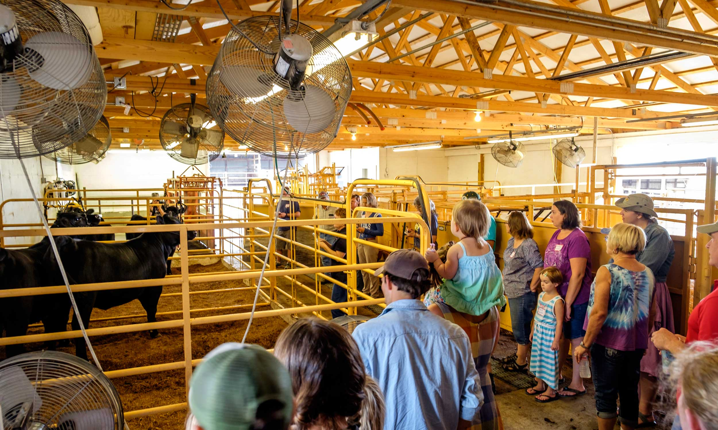 April Valley Farms is a family diversified farming operation raising Registered Angus Cattle, crossbred hogs and crops of wheat, corn, soybeans, and hay in Leavenworth County.