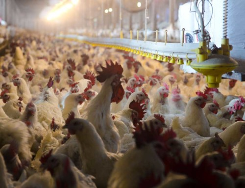 WILL A TYSON CHICKEN PLANT BE GOOD FOR KANSAS?