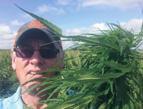 THE FORGOTTEN CROP: Kansas legislature legalizes cultivation of industrial hemp