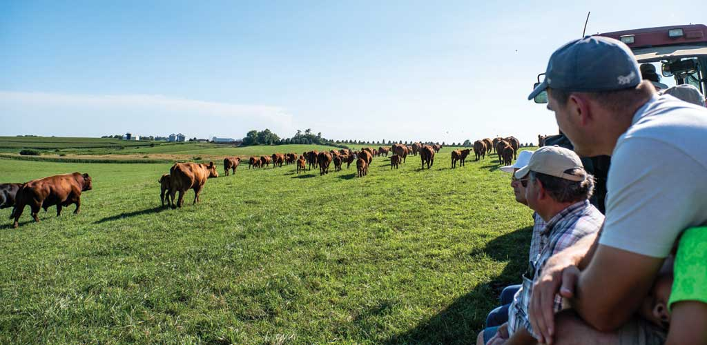 Farm Sweet Farm's 35 years of organic experience means balancing priorities