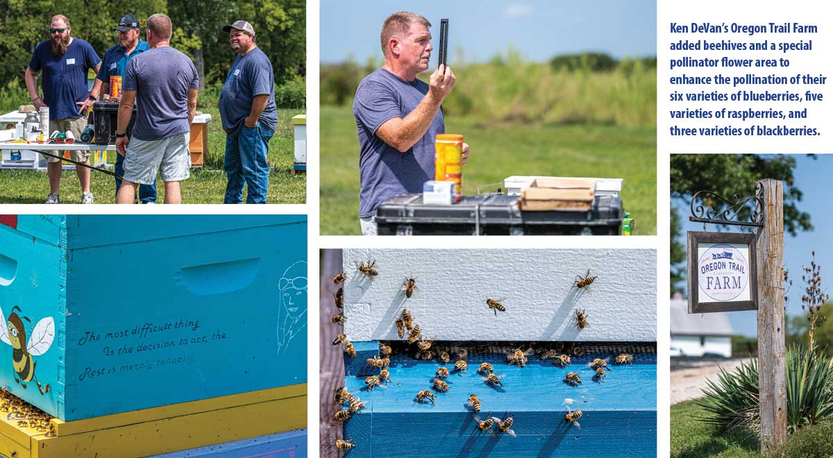 Ken DeVan's Oregon Trail Farm added beehives and a special pollinator flower area to enhance the pollination of their six varieties of blueberries, five varieties of raspberries, and three varieties of blackberries.